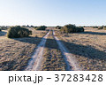 Country road in a great plain landscape 37283428