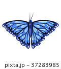 青 白 白背景のイラスト 37283985