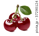 3 red sweet cherries isolated on white background 37290124