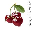 Fresh sweet cherries isolated on white background 37290125