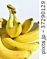 バナナ 37290129
