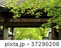 京都 法輪寺 緑の写真 37290206