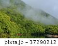 京都 風景 自然の写真 37290212