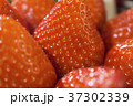 Close-up detail of a fresh red strawberry 37302339