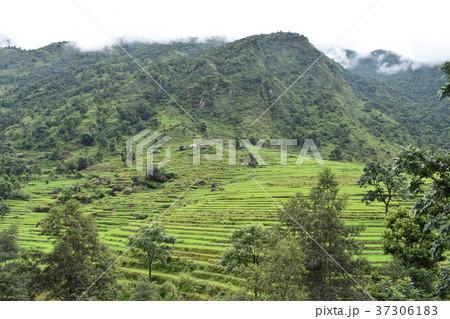 ネパール アンナプルナ 山の風景 37306183