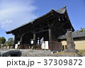 東寺 寺 寺院の写真 37309872