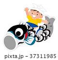 男の子 端午の節句 鯉のぼりのイラスト 37311985