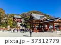 鎌倉 鶴岡八幡宮 本宮の写真 37312779