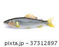 香魚 37312897