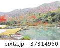 秋の天龍寺 紅葉の曹源池庭園 37314960