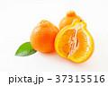 オレンジ 果物 フルーツの写真 37315516