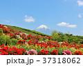 富士山 山 花の写真 37318062