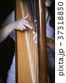 ハープ演奏 37318850
