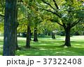 公園の林 37322408