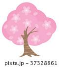 桜 37328861
