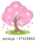 桜 37328862