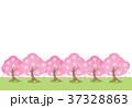桜並木 37328863