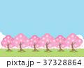 桜並木 37328864