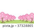 桜並木 37328865