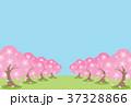桜並木 37328866