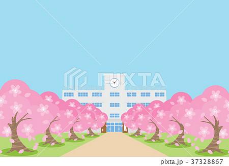 桜並木 37328867