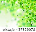 新緑 若葉 葉のイラスト 37329078