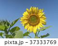 花 フラワー お花の写真 37333769