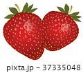 苺 果物 フルーツのイラスト 37335048