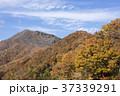 風景 自然 秋の写真 37339291