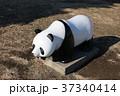 パンダのオブジェ 37340414