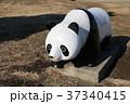 パンダのオブジェ 37340415