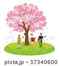 大きな桜の木の下で演奏するミュージシャン 37340600