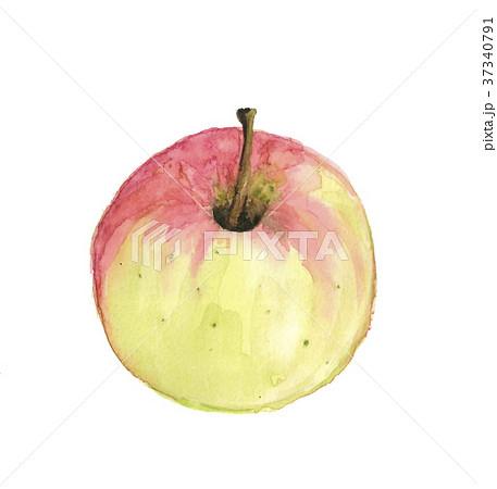 リンゴ 37340791
