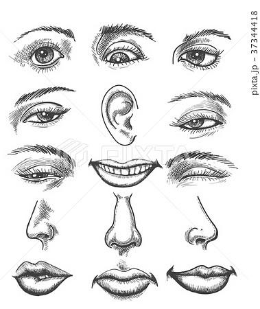 Vintage sketch human face parts 37344418