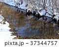 早春 小川 川の写真 37344757