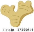 生姜 しょうが 根菜のイラスト 37355614