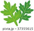 よもぎ 蓬 艾葉のイラスト 37355615