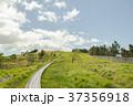 緑 景色 風景の写真 37356918