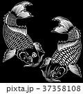 和調の鯉, 37358108