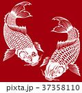 和調の鯉, 37358110