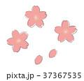 桜 花 春のイラスト 37367535