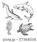 海 ベクタ ベクターのイラスト 37368038