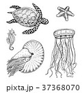 sea creature cheloniidae or green turtle and 37368070