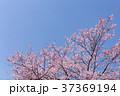 桜 春(4月) 37369194