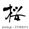 桜④ 37369371