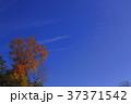 青空と紅葉 37371542