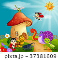 many insect and a mushroom house in forest 37381609