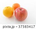 オレンジ リンゴ みかんの写真 37383417