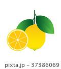 レモン 檸檬 食べ頃のイラスト 37386069