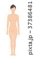 前を向いた女性の身体(主線なし) 37386481